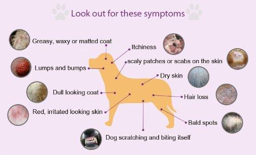 Dog Allergy Symptom Chart