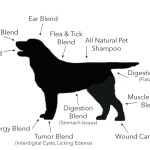 mapping the uses of essential oils on a dog