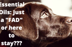 essential_oils_for_dogs