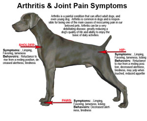aaa joint pain graphic