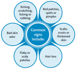 allergic skin conditions