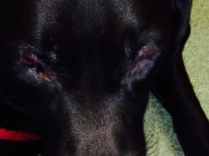 Before picture of puffy, allergy eyes