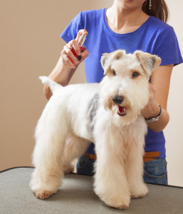 groomers find Anti-Anxiety blend calms their clients!