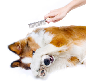 Oh no! Not the groomers!!!