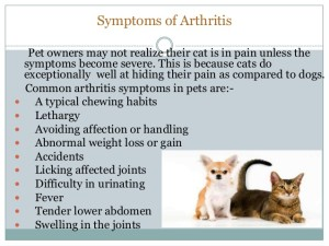 pet-bounce-arthritis-pain-relief-for-dogs-and-cats-4-638